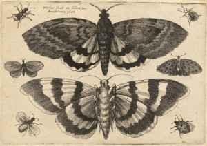 Wenceslas_Hollar_Two_moths_and_six_insects